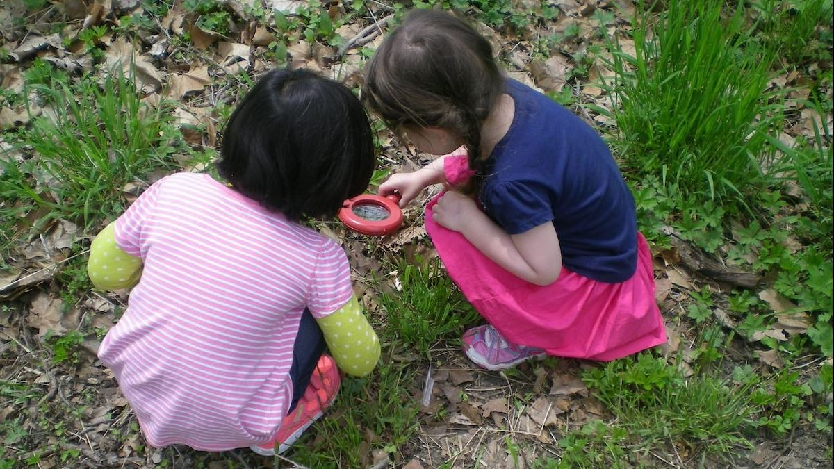 Preschool Bug Hunt